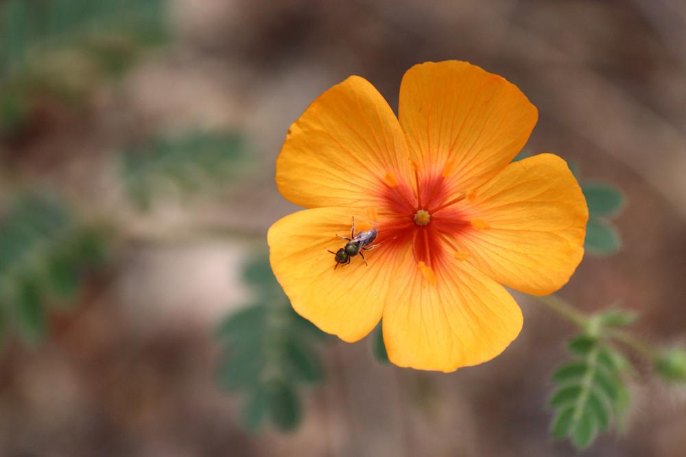 #15 - A Bug's Life