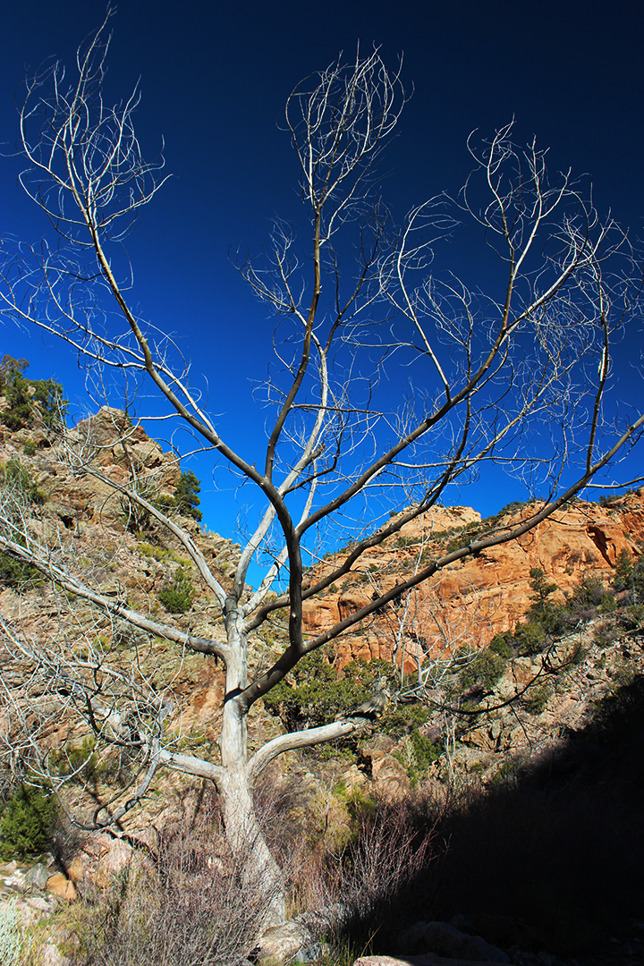 #37 - Reaching Tree
