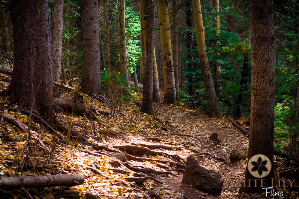 #113 - Fall Paths