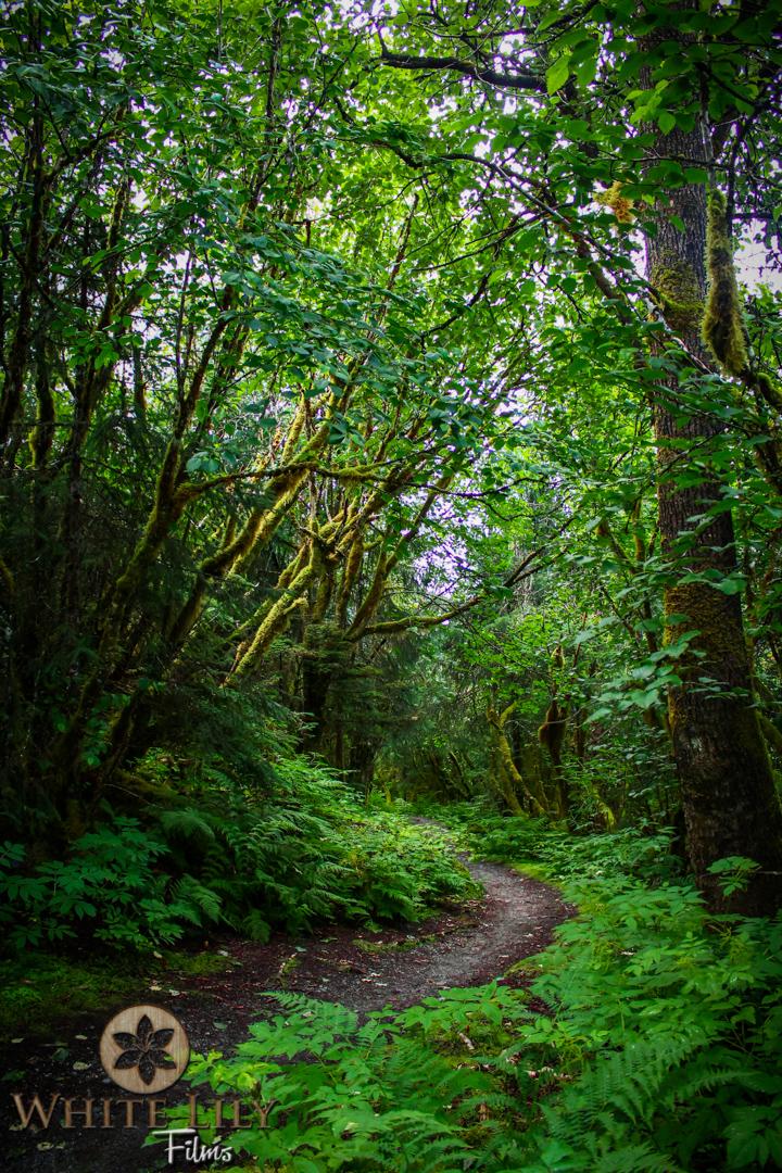 #123 - Greener Paths