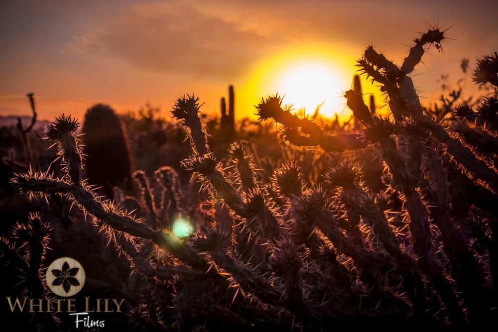 #125 - Cholla Sunsets