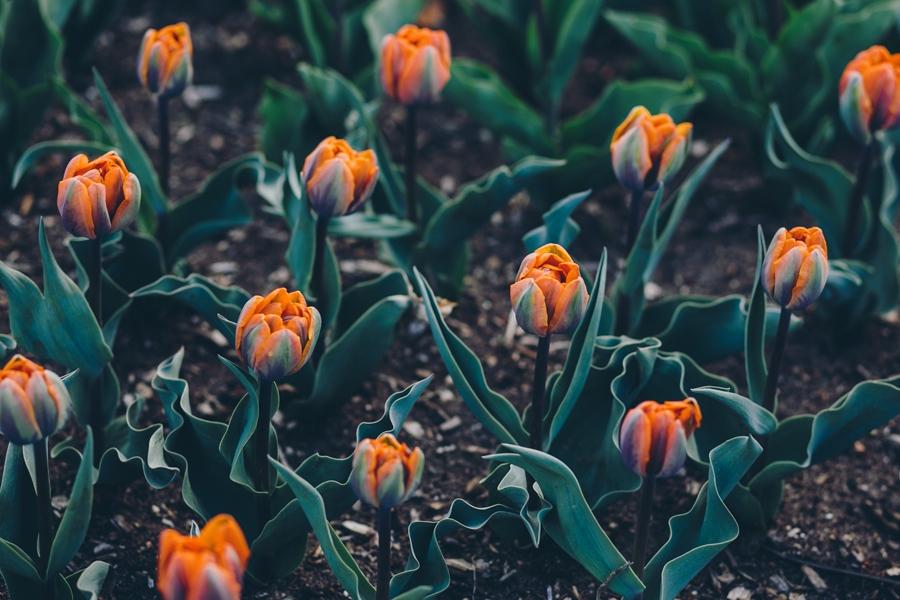 brooklyn-botanical-garden-engagement-005.JPG