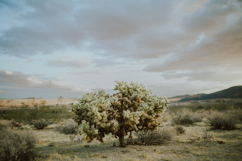 joshua-tree-ambergress-0004.JPG