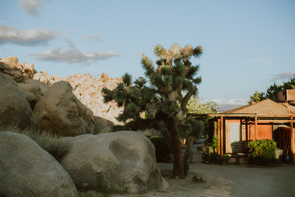 joshua-tree-ambergress-0008.JPG