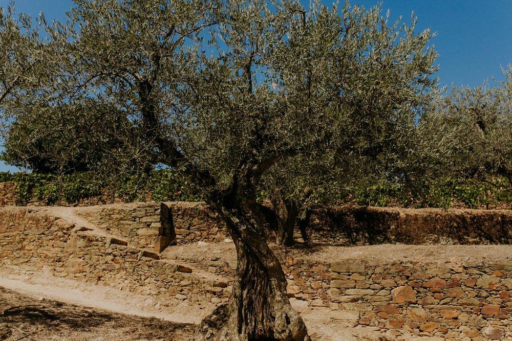 portugal-lagos-amber-gress_0114.jpg