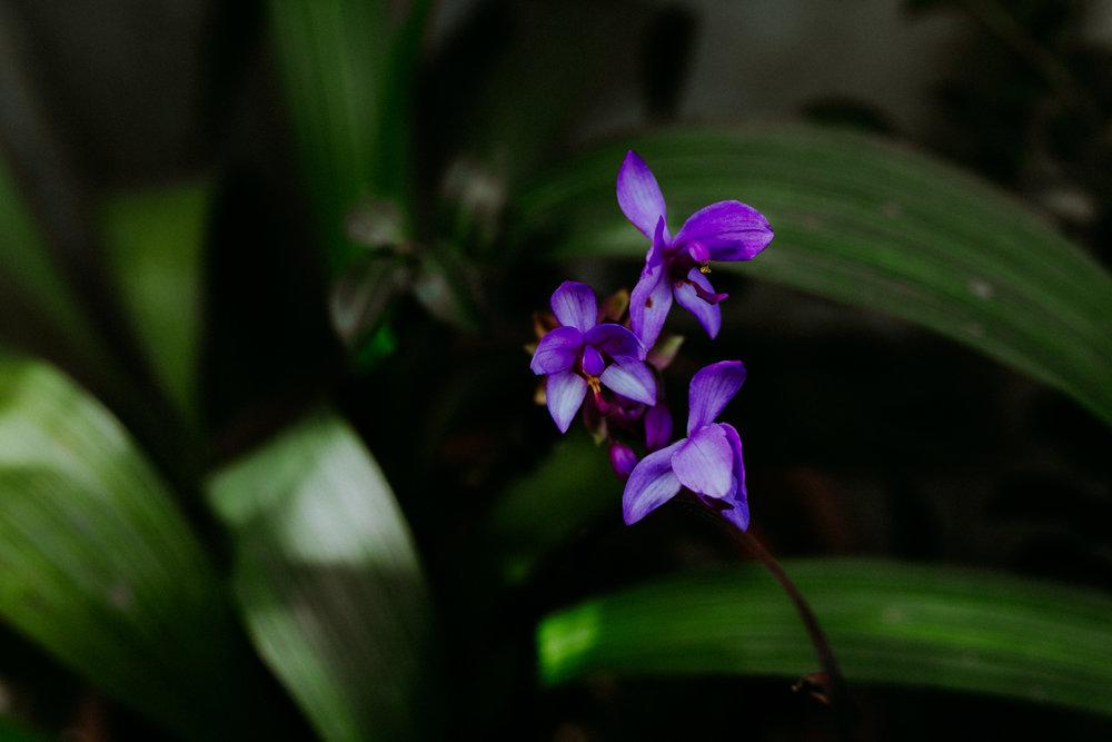 guatemala-amber-gress-0009-.jpg