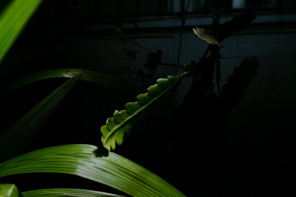 guatemala-amber-gress-0010-.jpg