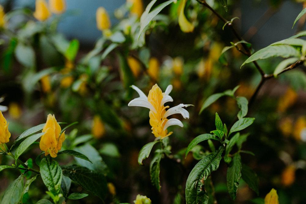 guatemala-amber-gress-0107-.jpg