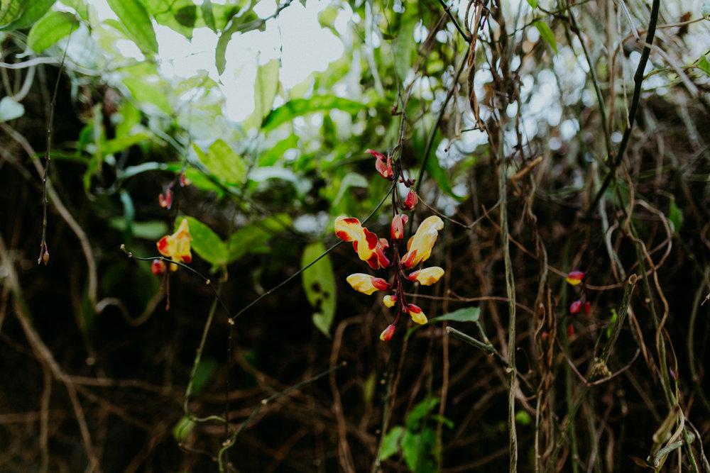 guatemala-amber-gress-0106-.jpg