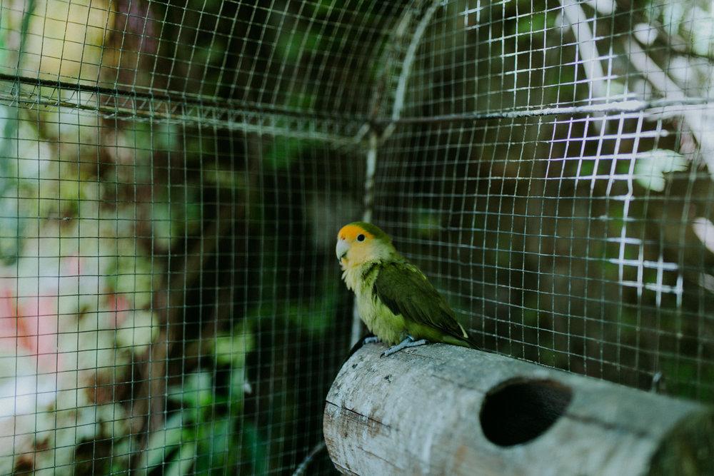 guatemala-amber-gress-0312-.jpg