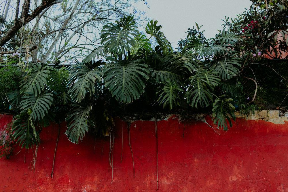 guatemala-amber-gress-0336-.jpg