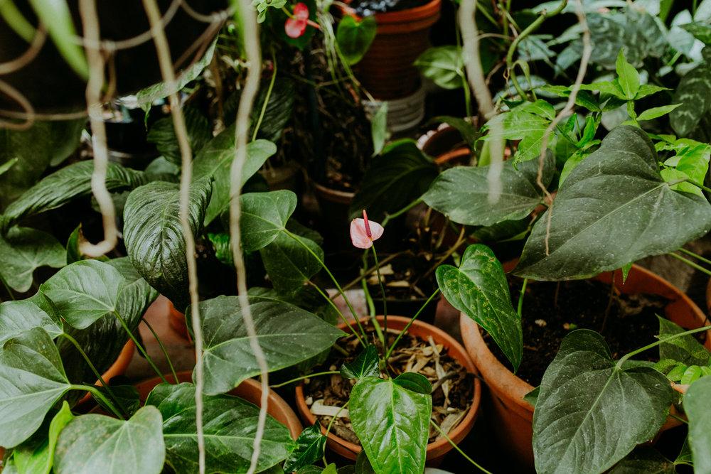 guatemala-amber-gress-0391-.jpg