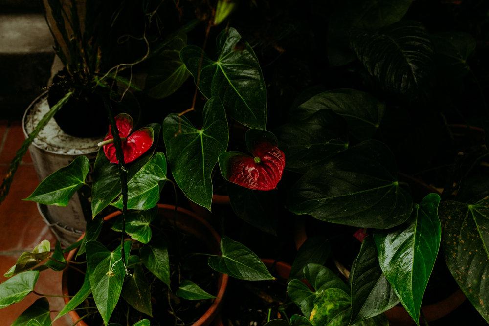 guatemala-amber-gress-0394-.jpg