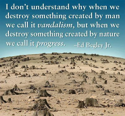 i-dont-understand-why-when-we-destroy-something-created-by-man-we-call-it-vandalism-but-when-we-destroy-something-created-by-nature-we-call-it-progress.jpg