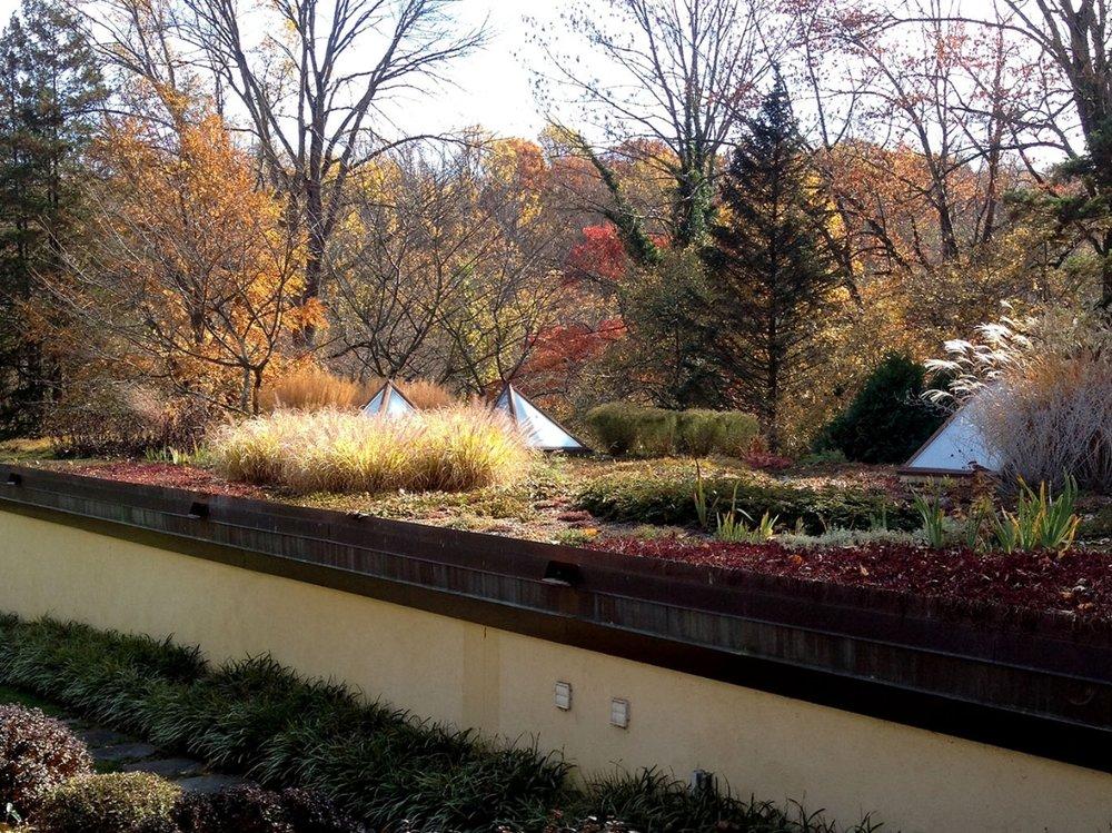 Copy of Greenroof Garden