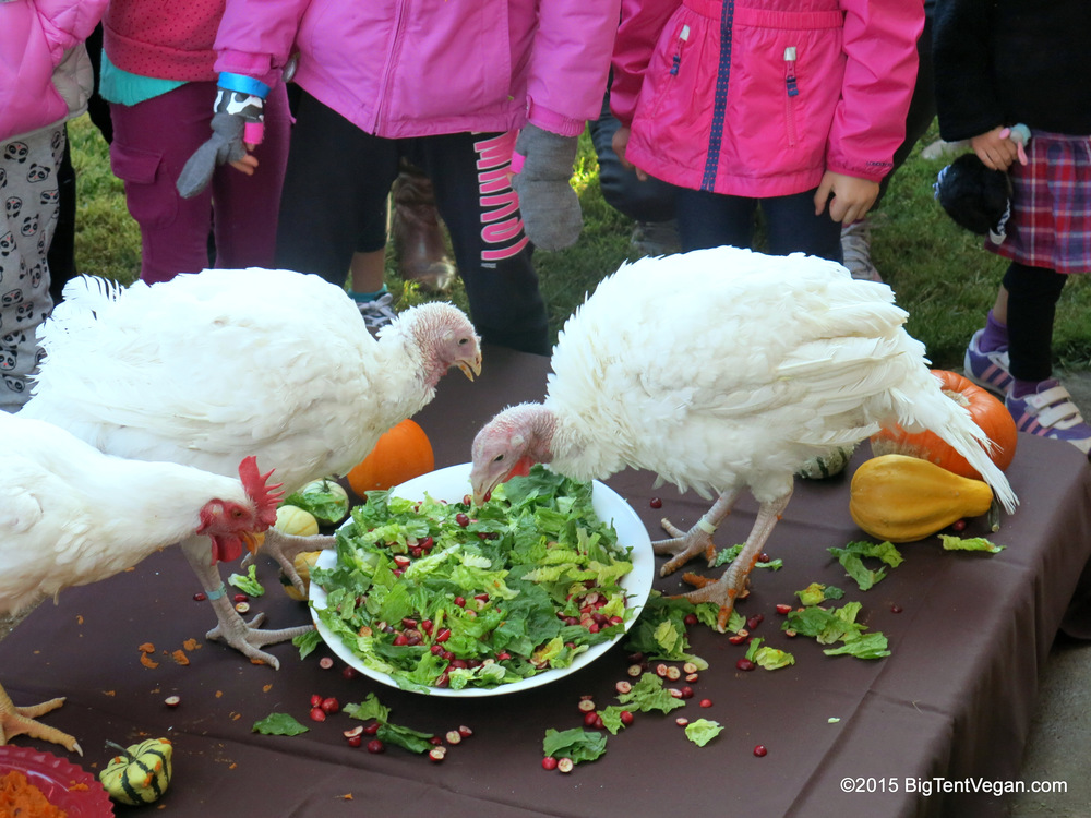 Madeline and Joanie with their chicken friend billy jean at Farm Sanctuary's Celebration For the Turkeys in Acton, Ca, USA on November 15, 2015. Now THIS is how all turkeys deserve to participate in Thanksgiving Festivities...alive, cherished, and as the Guests of Honor. <3