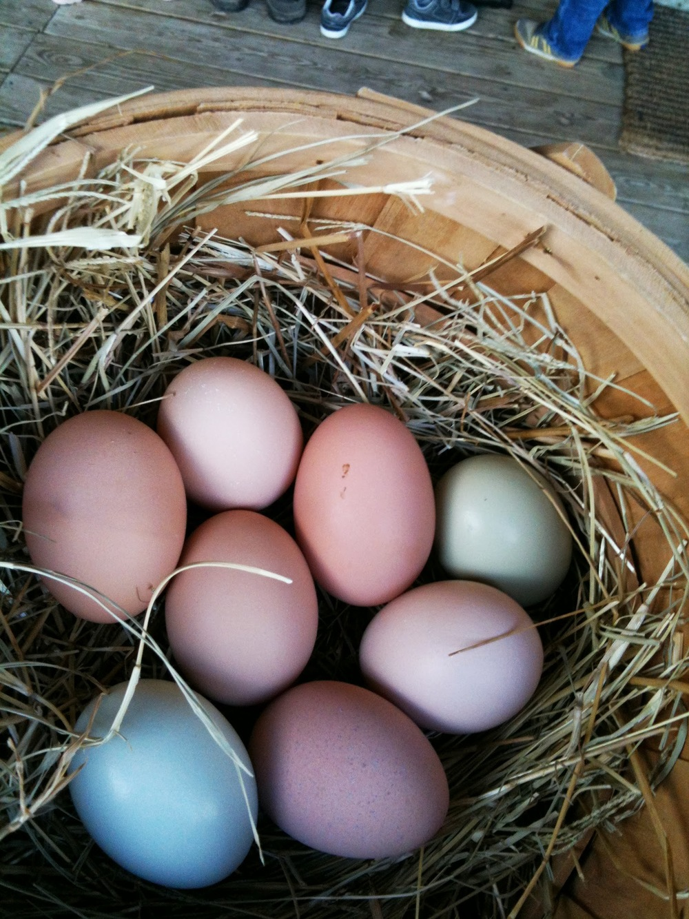 Fresh Eggs at Brood Farm