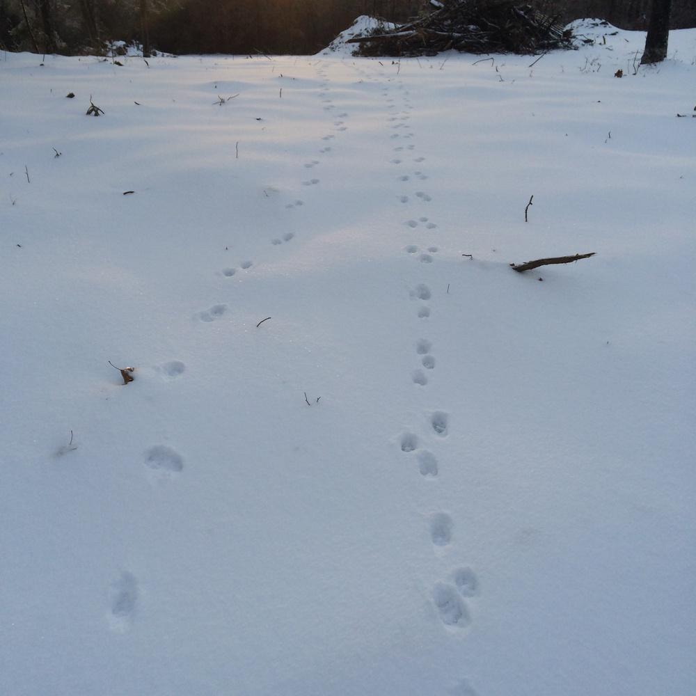 Tracks everywhere