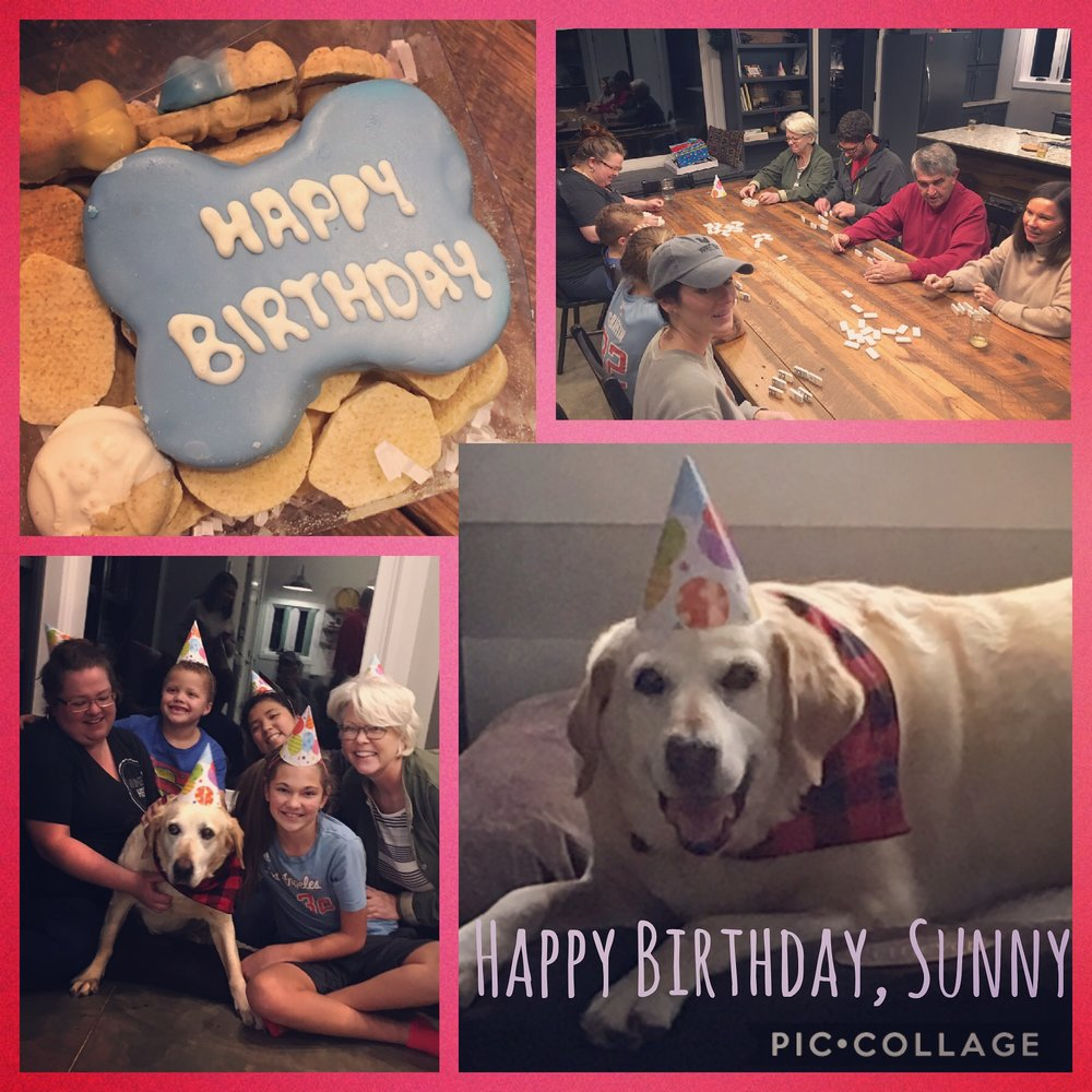"December 17, Sunny celebrated her 11th birthday. She celebrated with party hats and presents in the company of all the folks who love her most. Oh, and, she is now an inside dog. Not just sometimes. Not just in the cold. Always. As Esther would say, ""Don't judge!"""