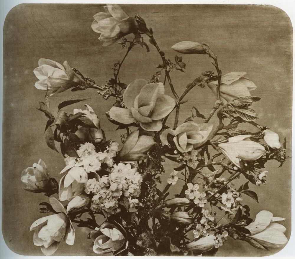 Adolphe Braun, Flower Study 1854-55