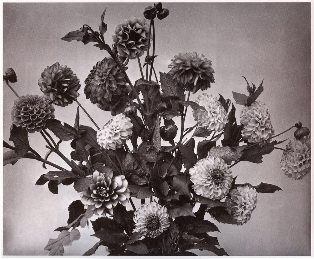 Adolphe Braun    , Flower Study   , 1855