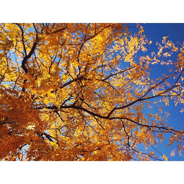 🔶🔷 . . . . . #nycfall #newyorkcity #fall #newyorkinsta #newyorkinstagram #newyork #nyc #visualsoflife #made_in_ny #inspirationcultmag #discovernyc #discovernewyork #ourplanetdaily #moodygrams