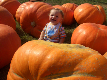 pumpkin-patch.jpg