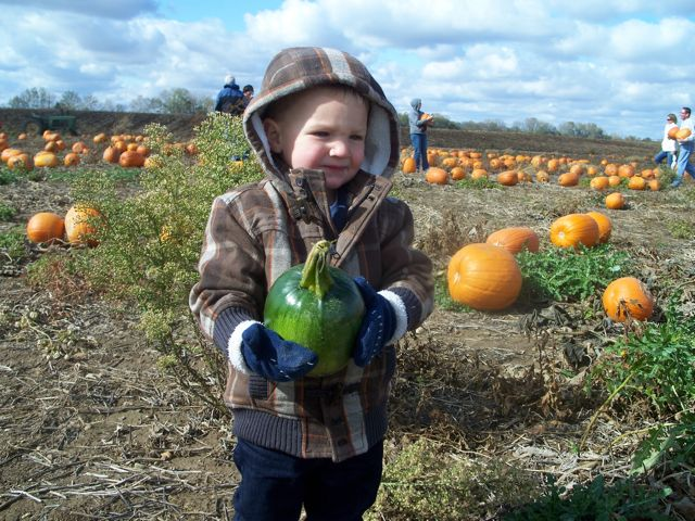 Evan's very first pumpkin from a real pumpkin patch - Oct 2008, 19 mos
