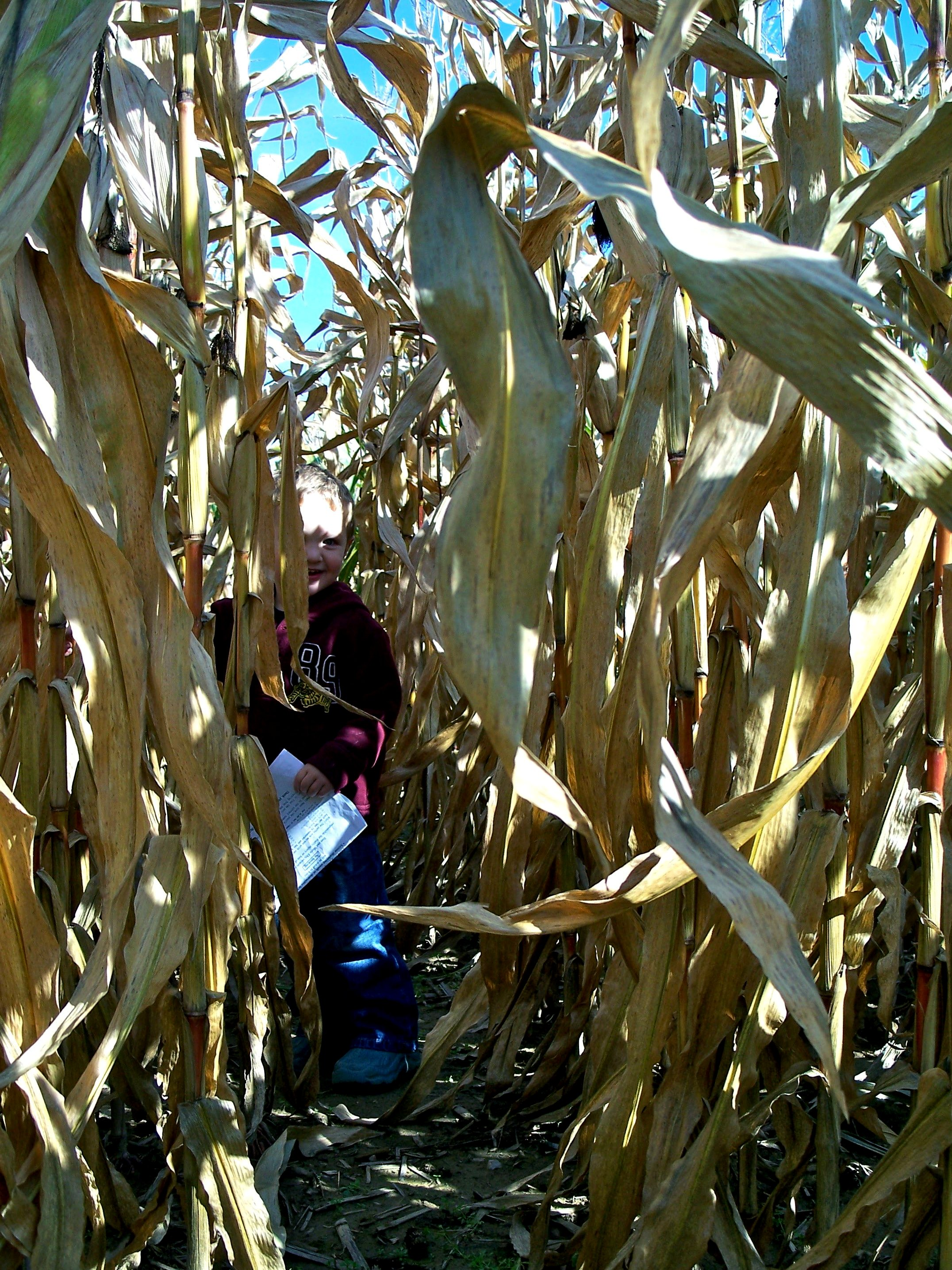 evan in corn