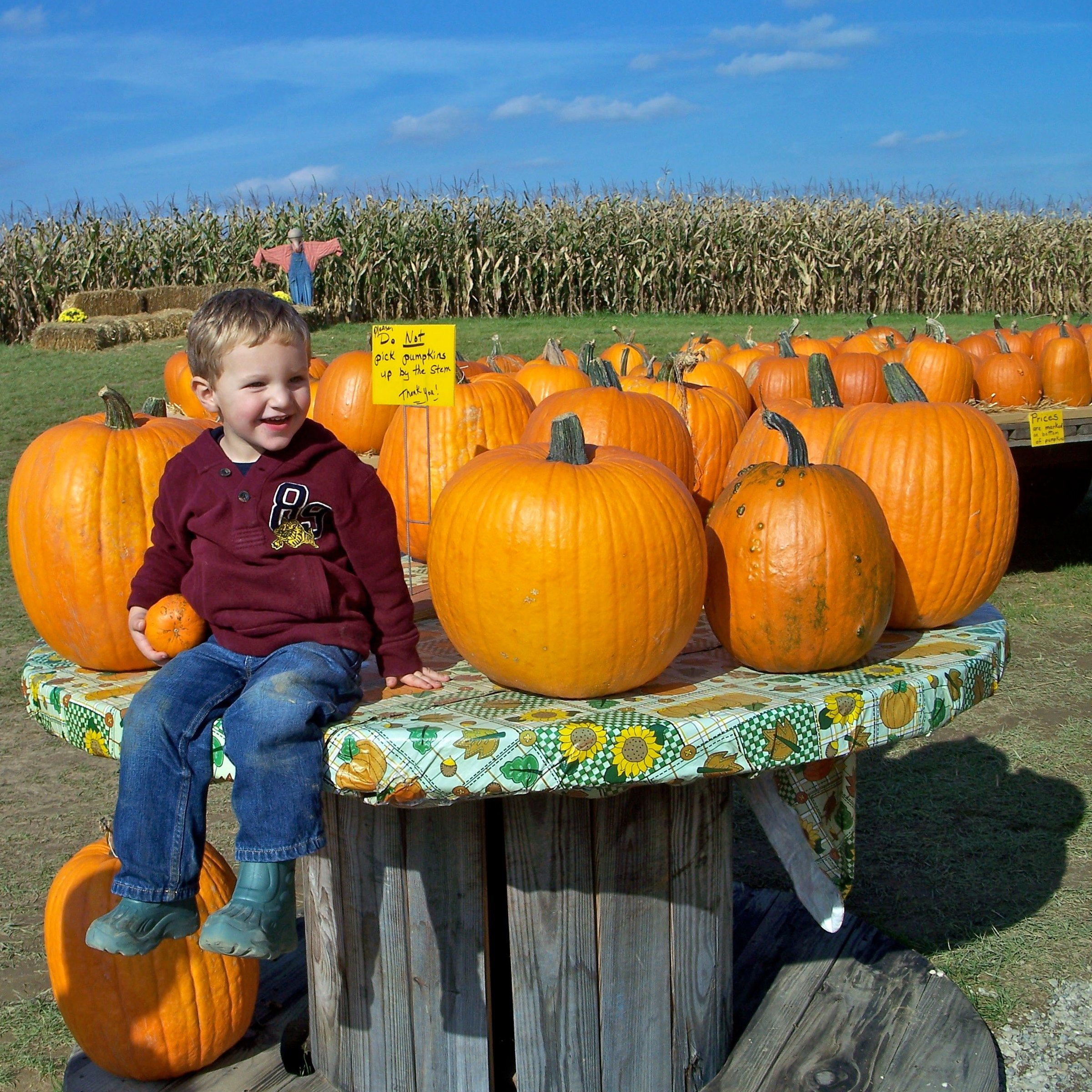 evan with pumpkins