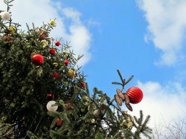 christmas tree fraze