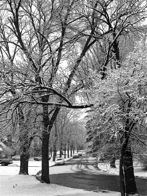 Our Snowy Tree Lined Street