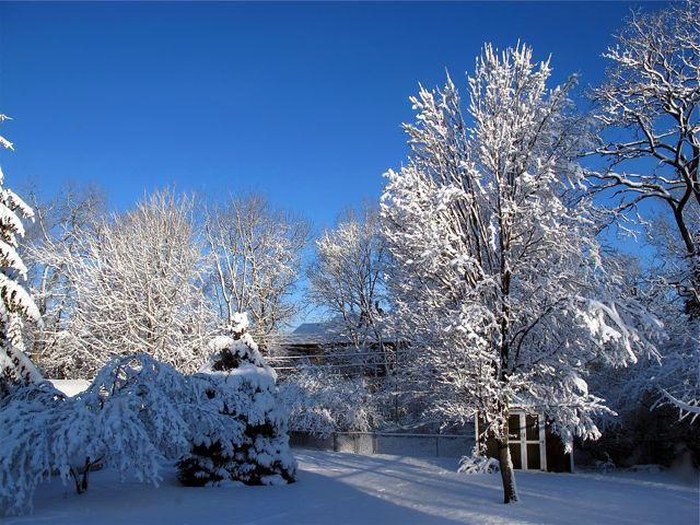 snowing backyard