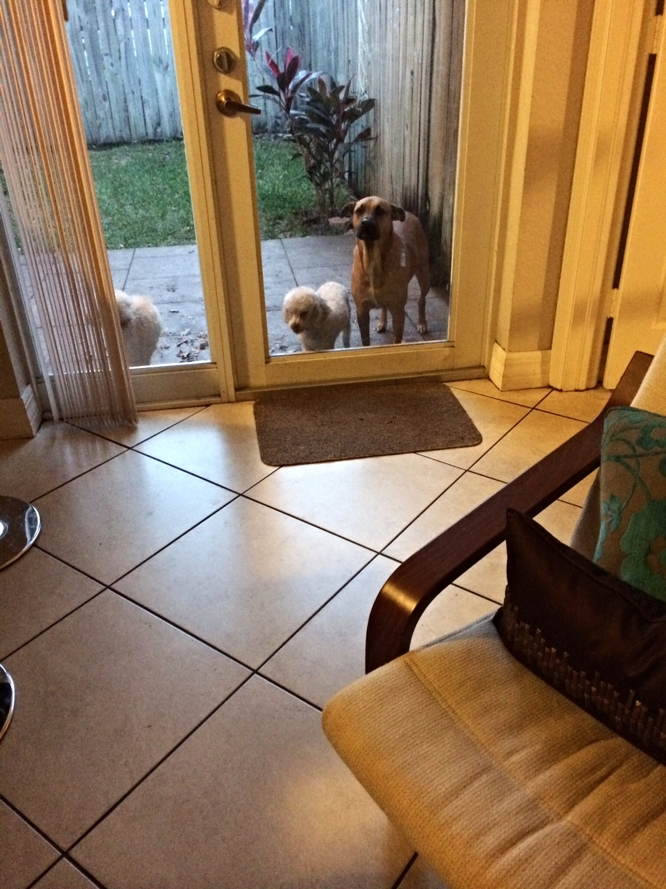 They really hated to be outside. Miami is very muggy.