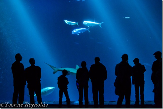 13_Jan_Monterey Bay Aquarium_005_edit