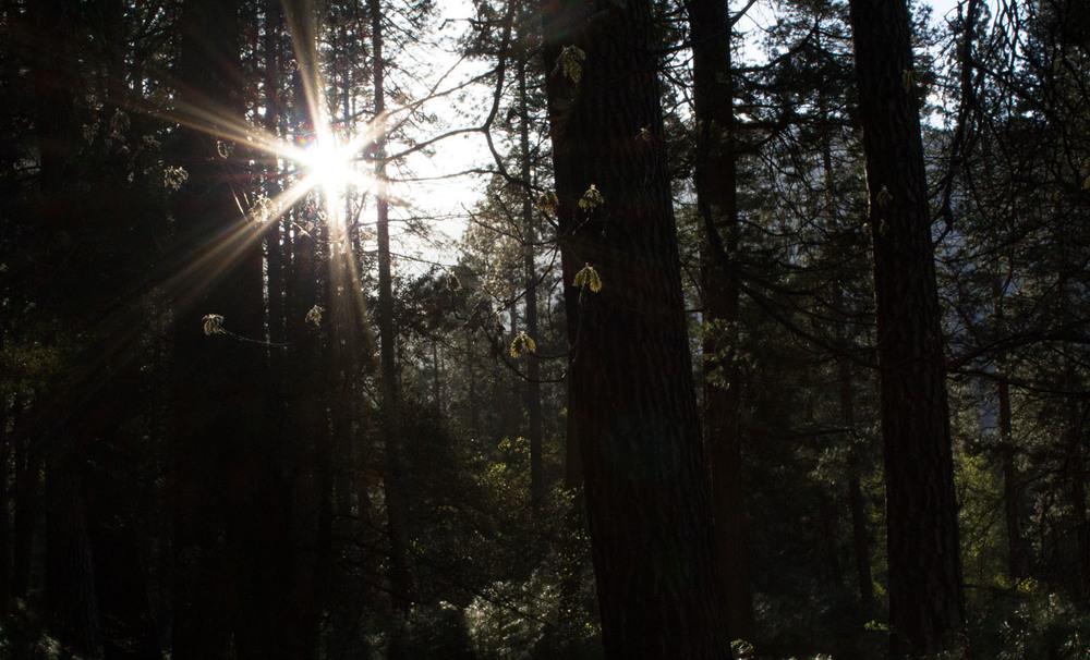 SunlightTrees.jpg