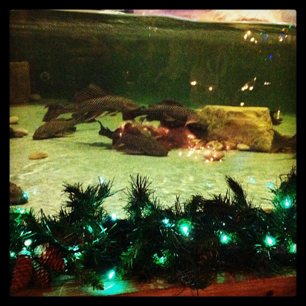 Fish n gator