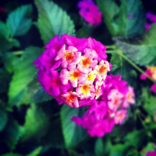 Winter Flowers of Florida