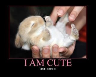 I'm cute and I know it