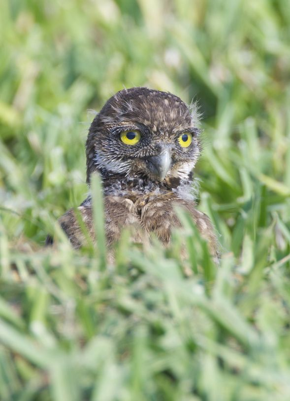"hungoverowls: ""Did I look like I was having fun last night? Please say yes. I could really use a yes."""