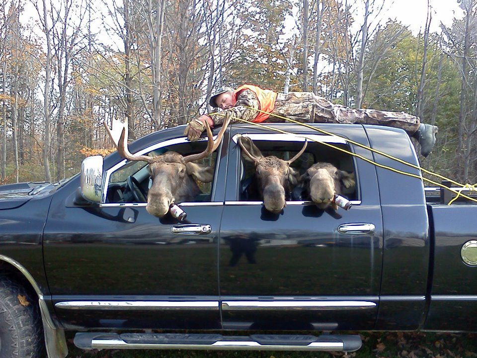 This actually happened with some guys from Maine . They dressed the truck up with the guy spread eagled on the roof. The driver and passenger put on Moose Heads. Down the Maine toll road Interstate they went, causing about 16 accidents. They went to jail.