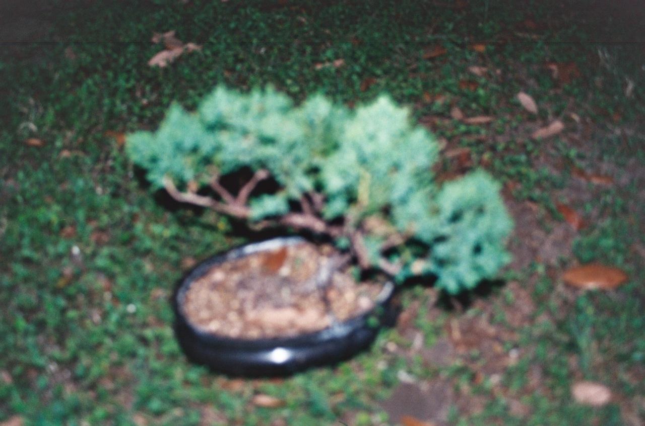 Blurred Bonsai