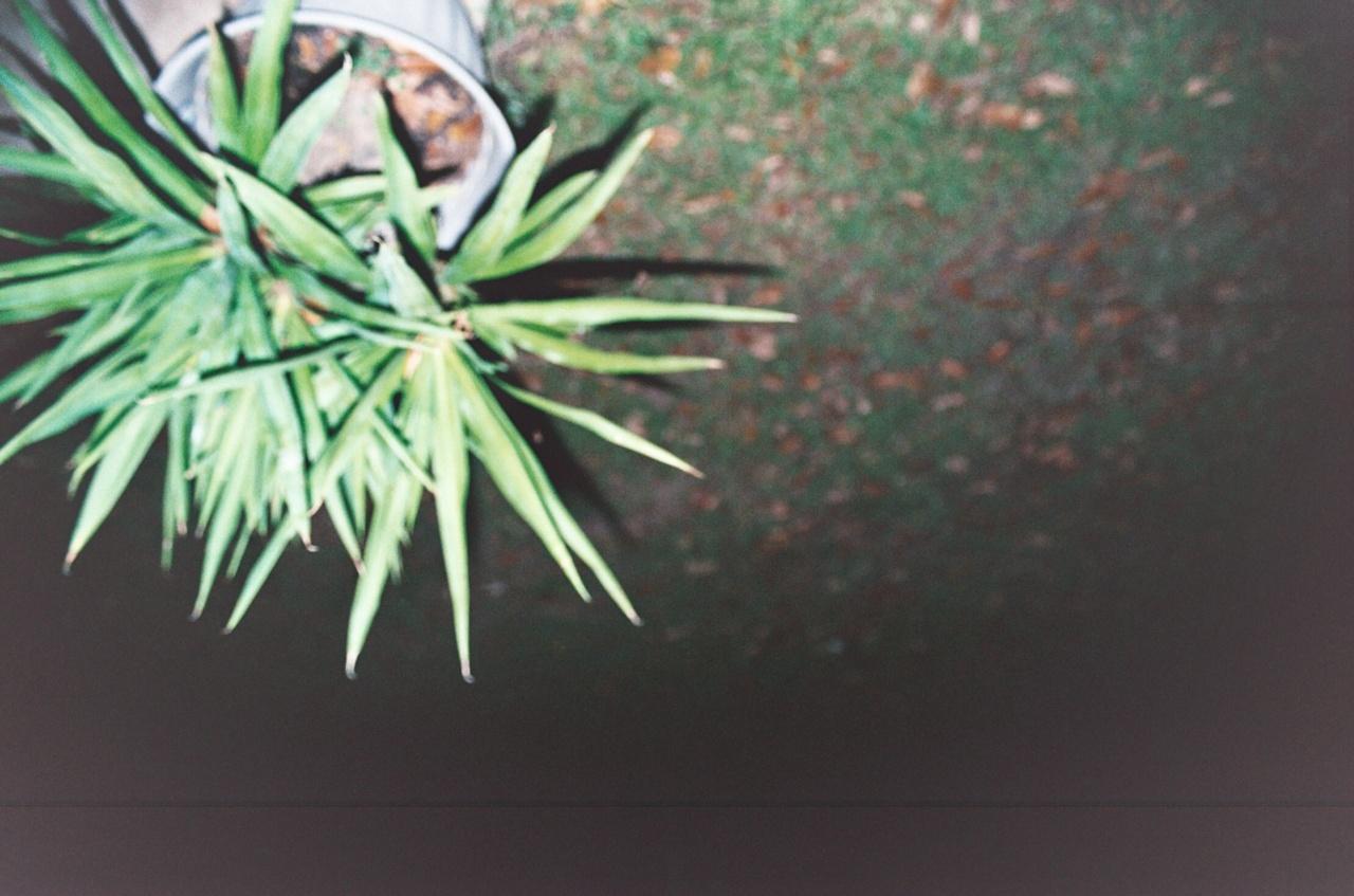 Blurred Plant