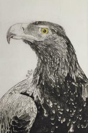 Eagle web.jpg