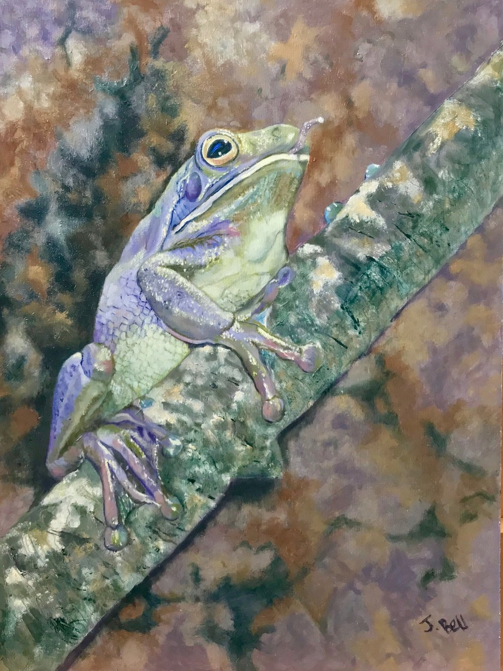 Australian Tree Frog - Jenine Bell - Watercolour.jpg