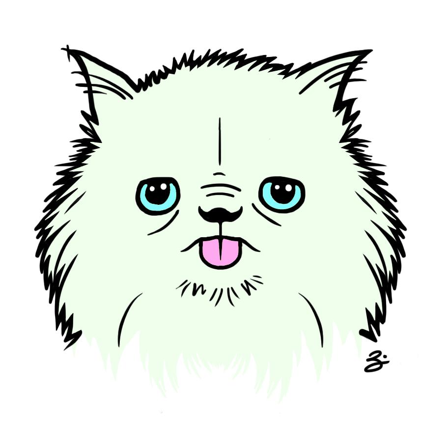 gizmo_persiancat_zk.jpg