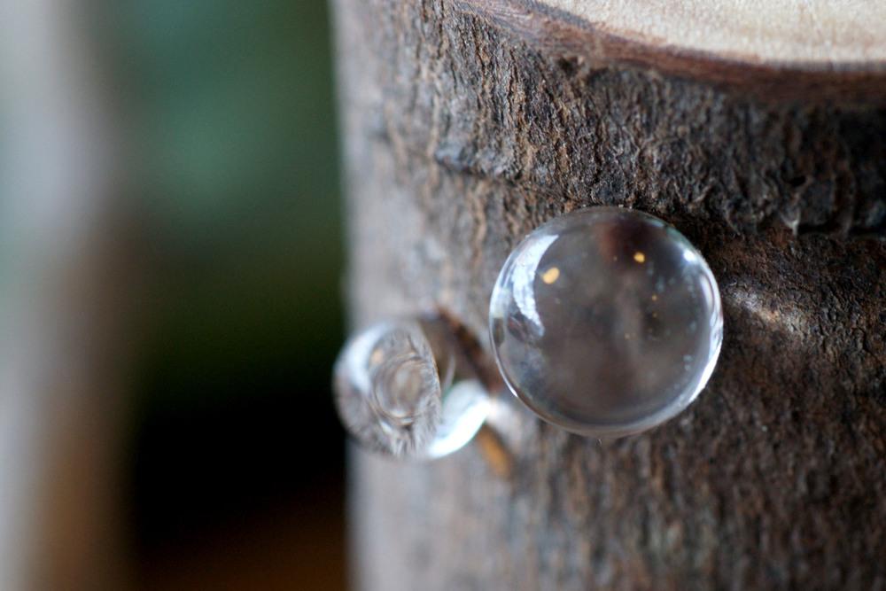 Pomme (1 of 12).jpg