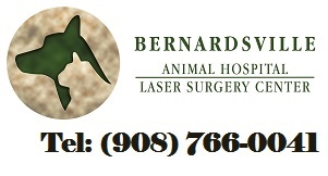 Bernardsville Animal Hospital