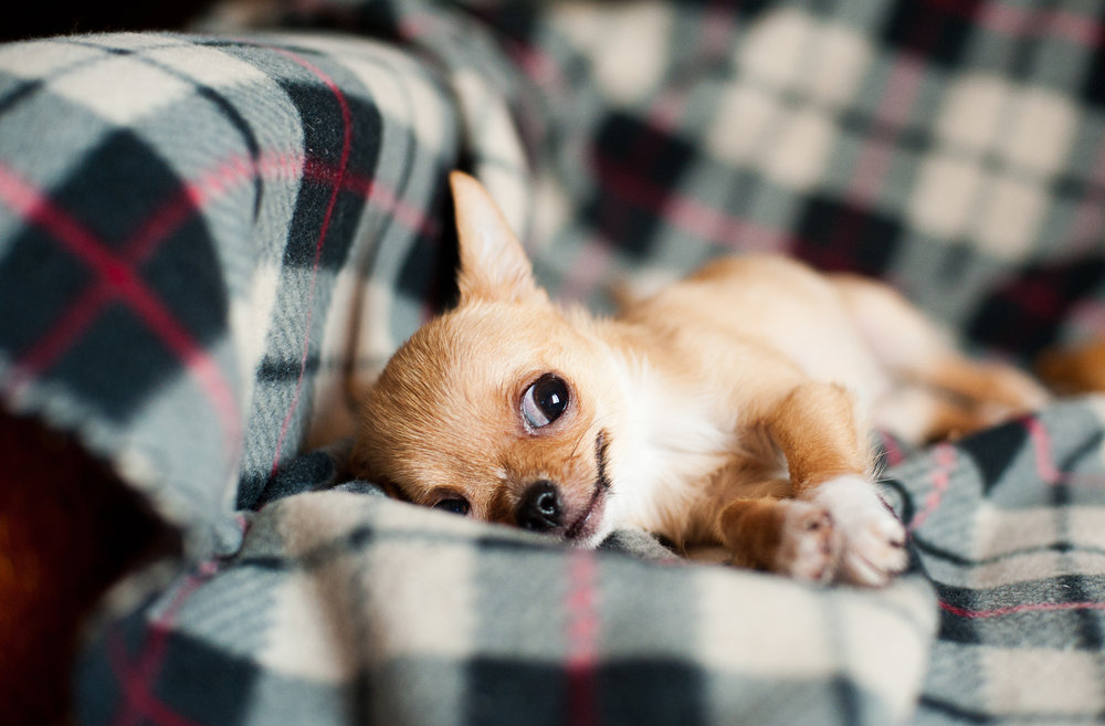 puppy 4.jpg