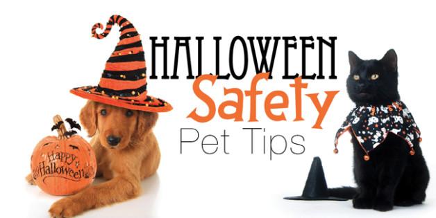 halloween-pet-safety-628x315.jpg